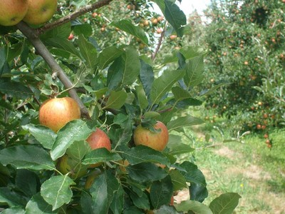 Experience Hawke's Bay's horticultural produce up close & personal on a tour of an organic orchard
