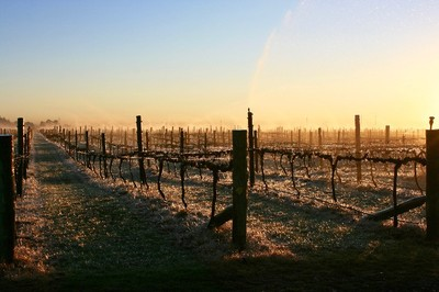 Vineyard private wine tour in winter Hawkes Bay New Zealand